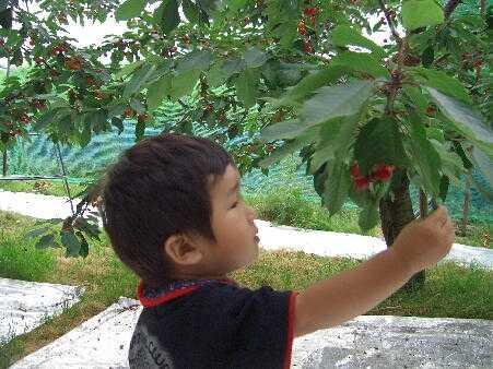 花笠観光果樹園