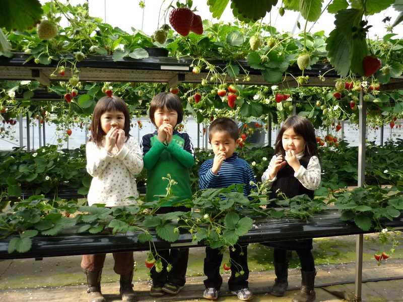 イイダ苺園