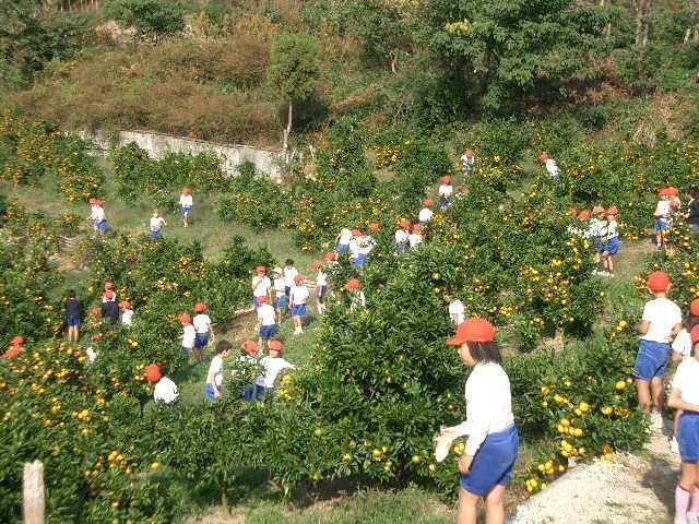 やぶ果樹園