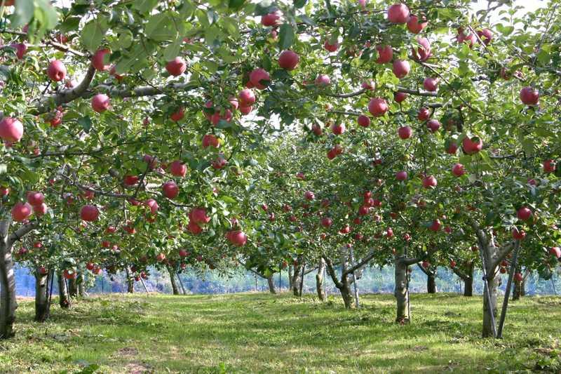 赤来高原観光りんご園
