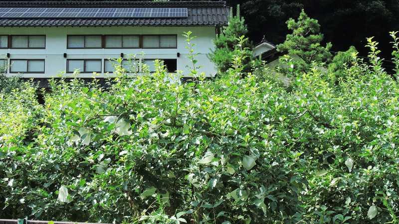 民宿寄倉荘観光りんご園