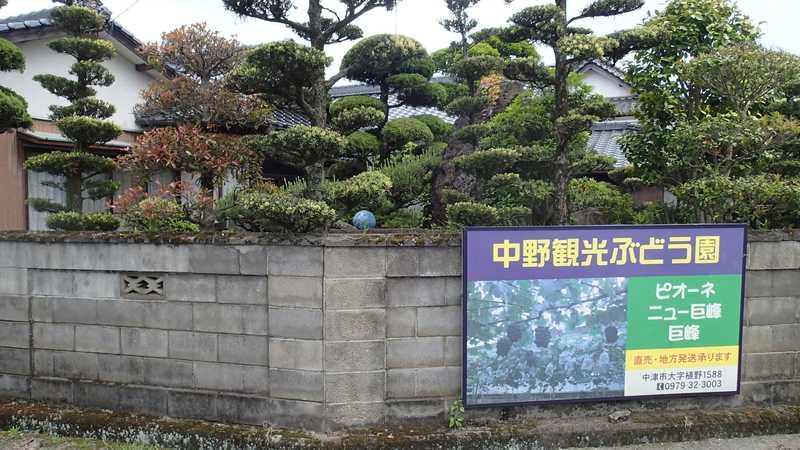 中野観光ぶどう園