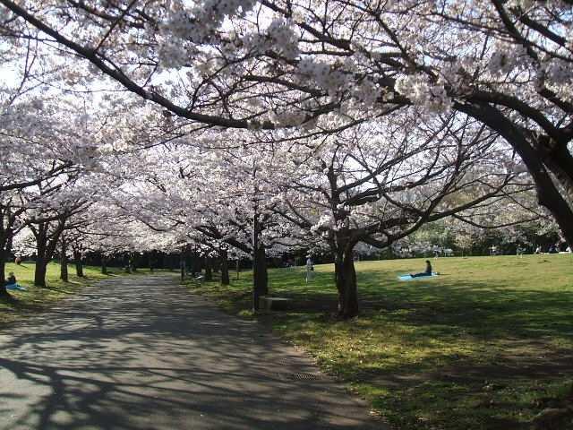 東京都立大井ふ頭中央海浜公園