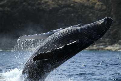 アイランドクイーンクジラウォッチング