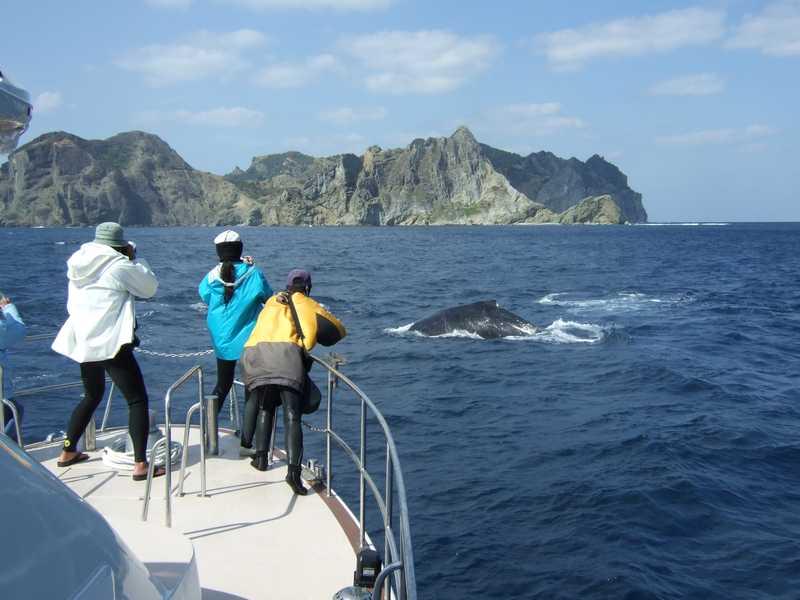 ビーストマスター2クジラウォッチング