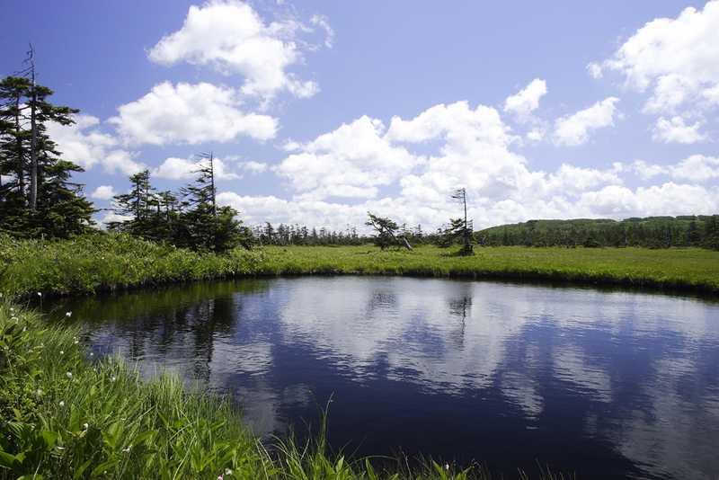 びふか松山湿原