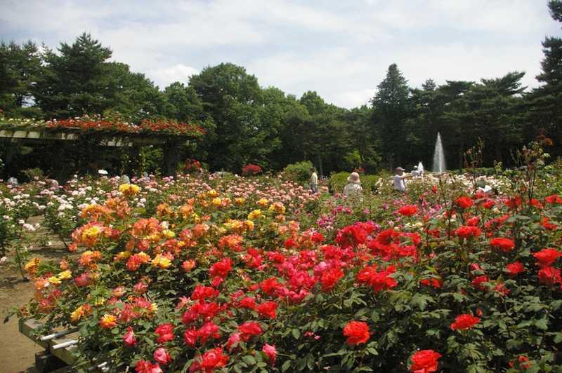 栃木県井頭公園