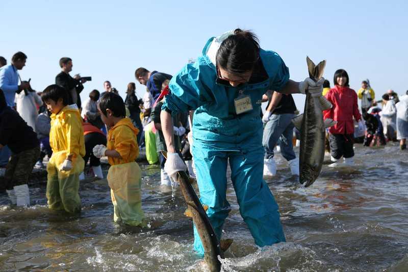 日本一のおいらせ鮭まつり