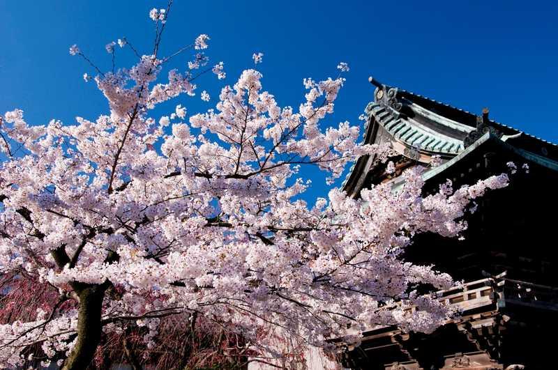 西新井大師花祭り