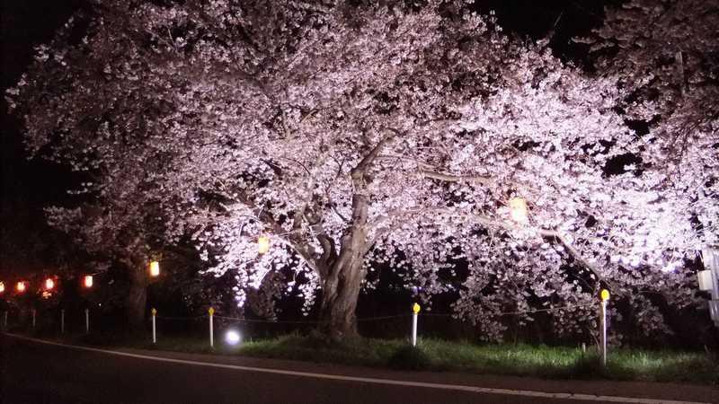 とやの湖桜まつり