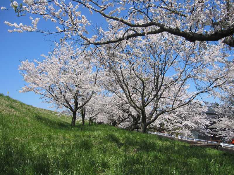 分水桜まつり「おいらん道中」