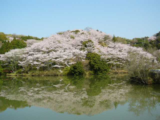 田辺市桜まつり