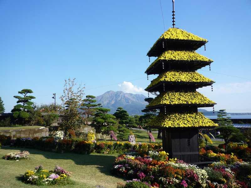 仙巌園菊まつり