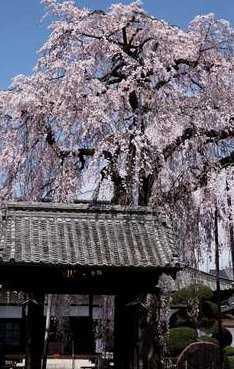 満願寺の画像