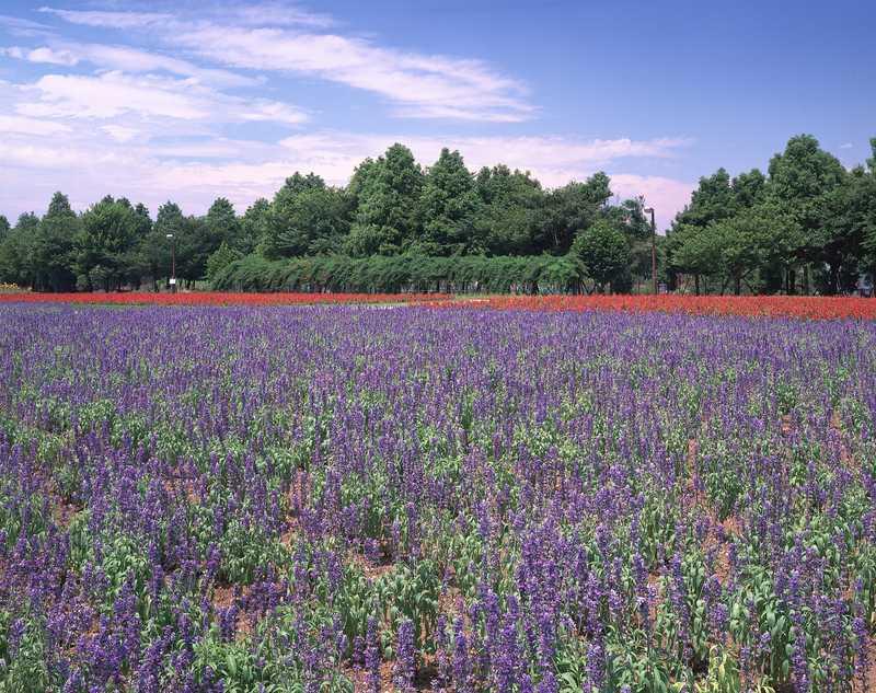 大宮花の丘