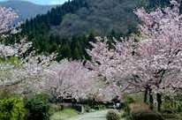 石川県農林総合研究センター林業試験場樹木公園