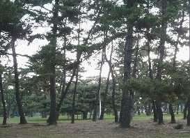 府営浜寺公園