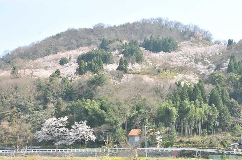天満山公園