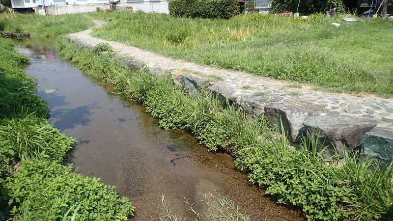 新谷菖蒲園