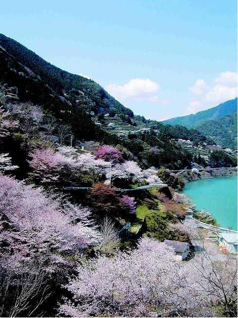 大渡ダム(茶霧湖)