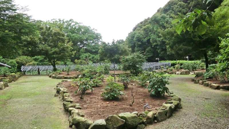 清水山ぼたん園