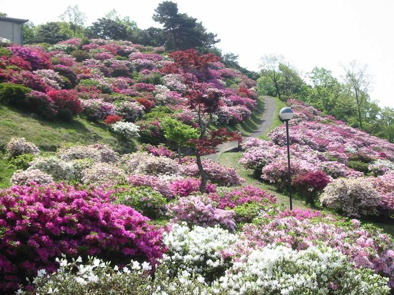 竹の古場公園