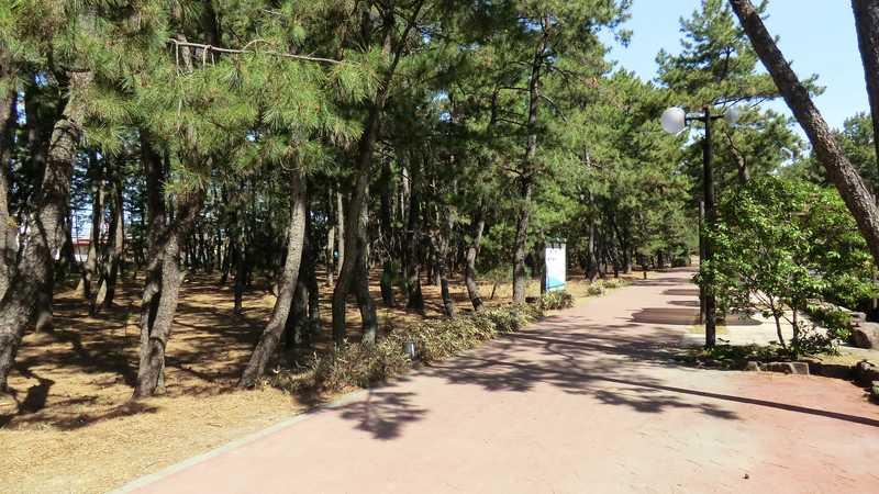 宮崎市民の森