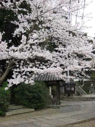 浄土寺(日限地蔵)