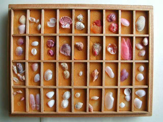 さくら貝資料館