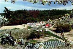さくらんぼ山観光農園