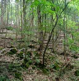 米里・大徳の森