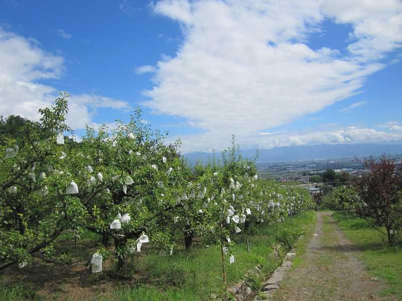 秋山観光農園