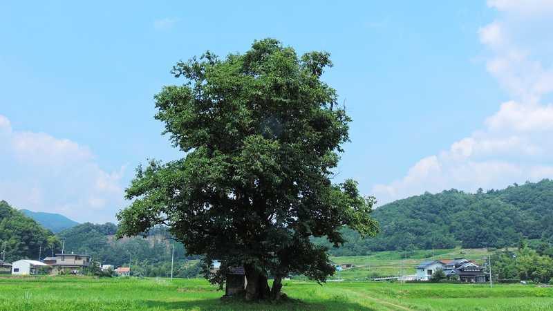 川北の大柿