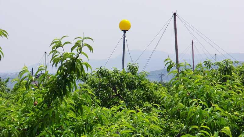 桃畑の防蛾灯