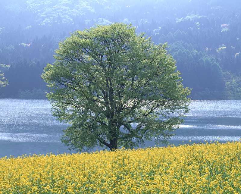 瑞穂の菜の花公園・北竜湖畔