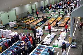 沼津魚市場INO魚食館