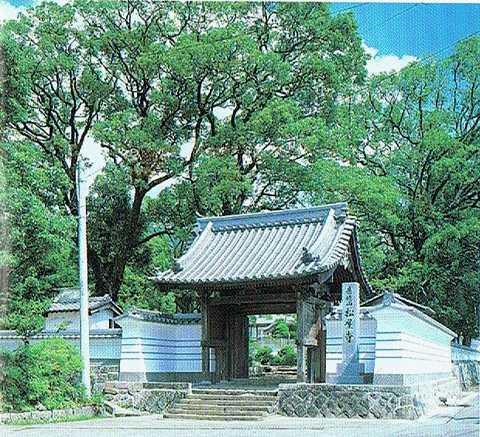 松屋寺の大ソテツ