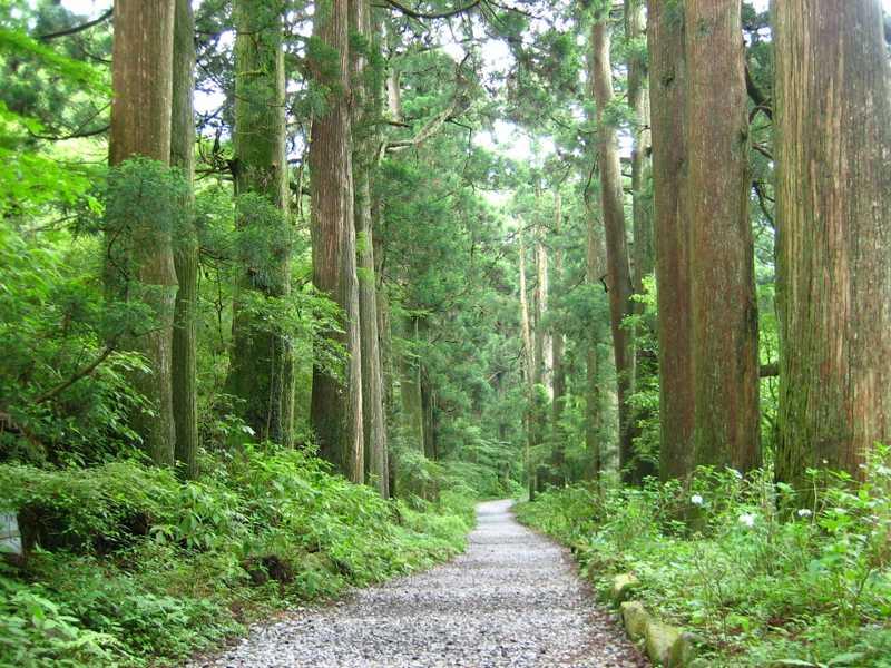 旧街道杉並木と石畳