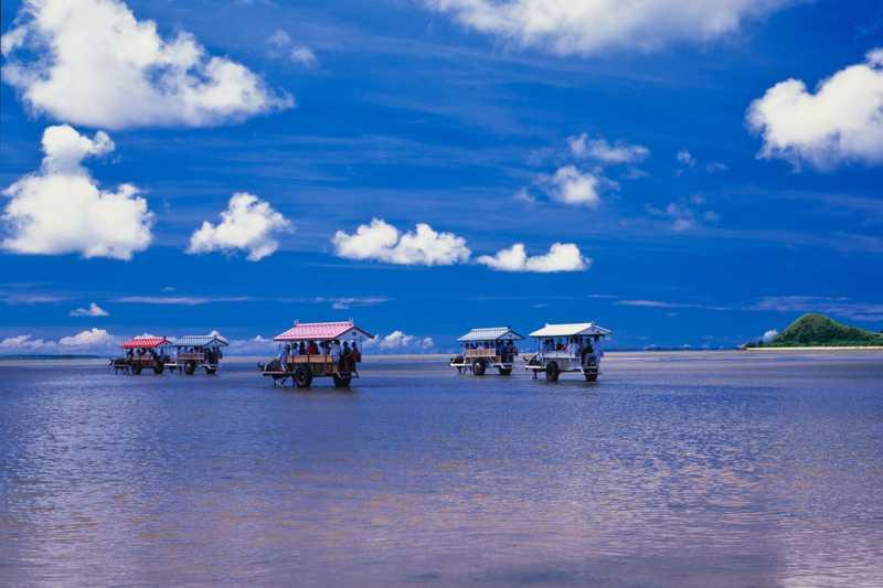由布島を渡る水牛車