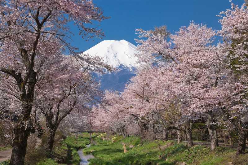 忍野村より富士山 新名庄川
