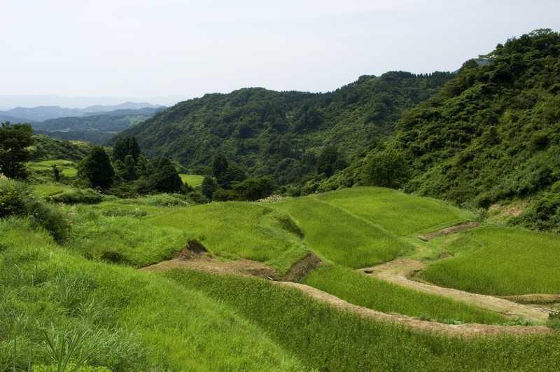 花坂の棚田