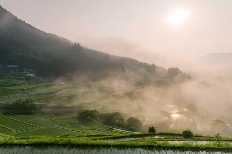 坂折棚田の画像