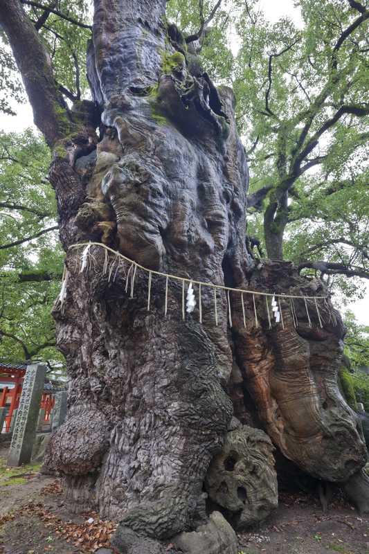 宇美八幡宮・衣掛の森