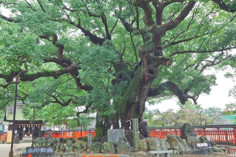 宇美八幡宮・湯蓋の森