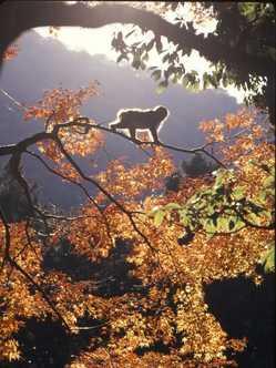 高崎山自然動物園の画像
