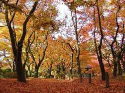 京都府立植物園の画像