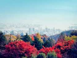 神戸布引ハーブ園/ロープウェイの画像