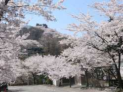 桜山公園の画像