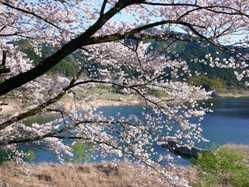 七川ダム湖畔の画像