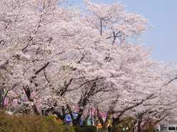 忠元公園の画像